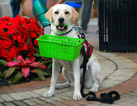 Service Dogs provide trained TASKS to assist their partner