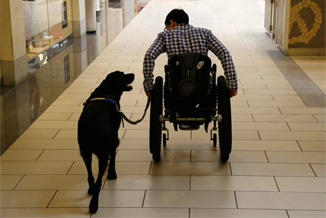 Service Dogs can open the door for an individual in a wheelchair