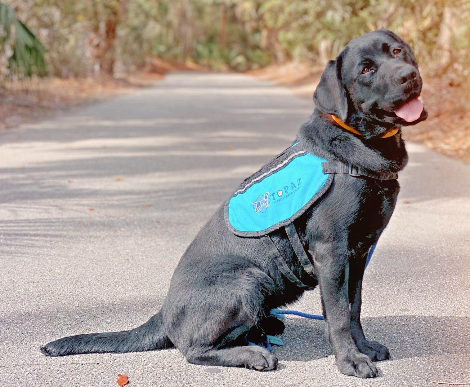 topaz-assistance-dogs-1-e1612795180538