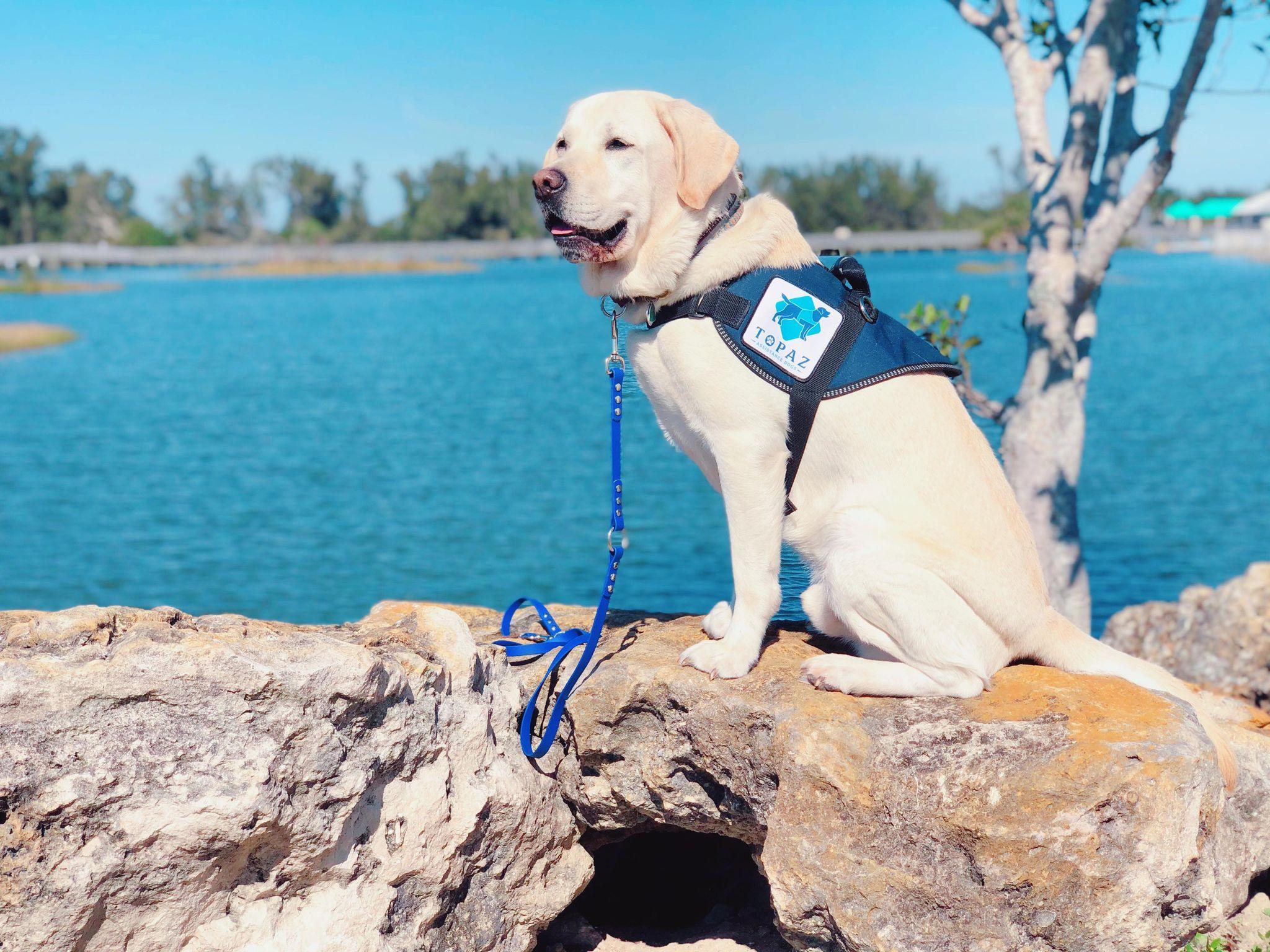 topaz-assistance-dogs-6