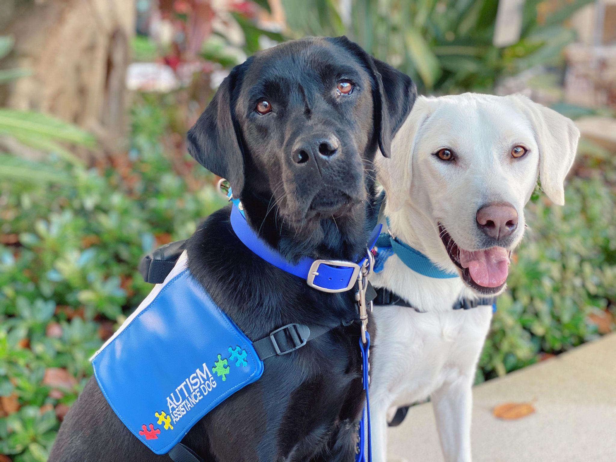 topaz-assistance-dogs-7